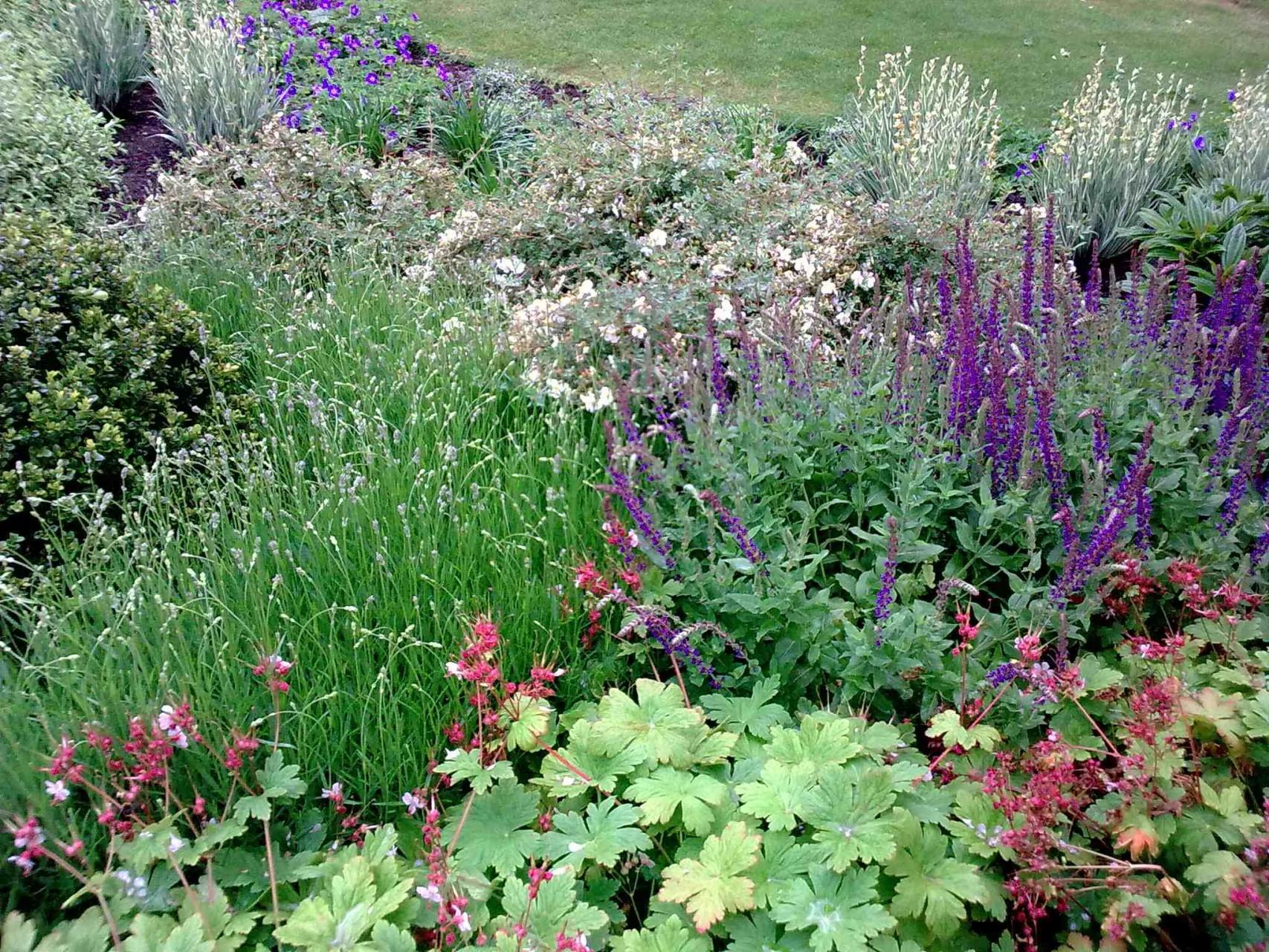 Bath School Garden Design02