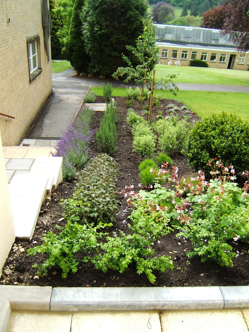 Bath school garden design 03 melanie jackson garden design for School garden designs