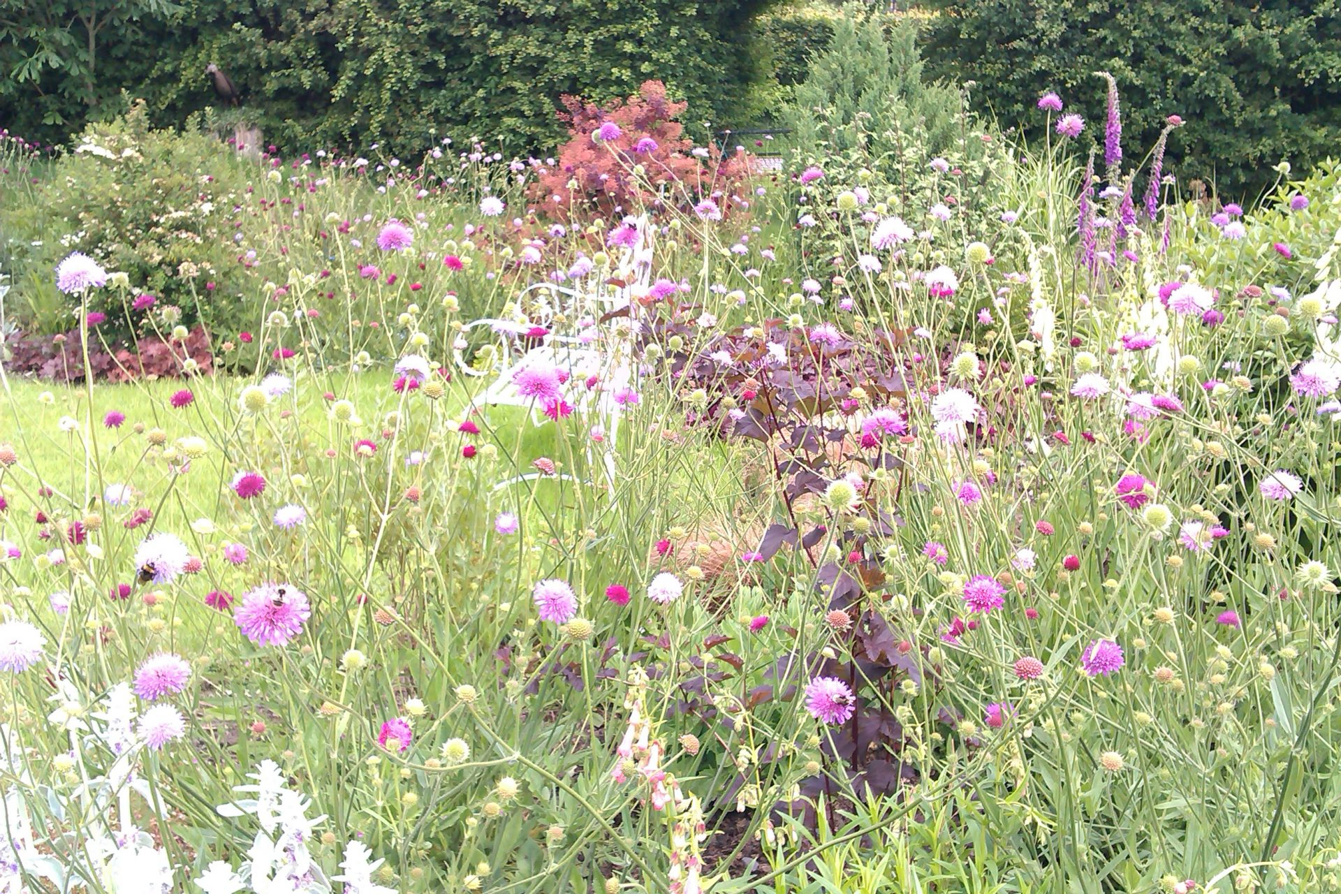 Bath garden planting